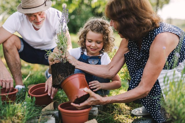 Essential gardening tools for spring