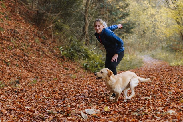Puppy training classes: learn how to train your dog with this online programme