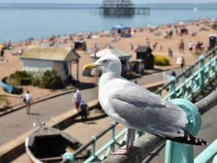 With over 15,800 reported articles discussing seagull sightings and attacks, many laugh about it after, whilst others are left in fear or feeling outraged.